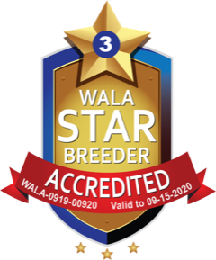 Modern Doodles WALA Star Breeder